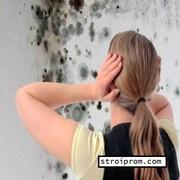 Устранение плесени на стенах в Алматы