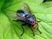 Как избавиться от мух в Алматы