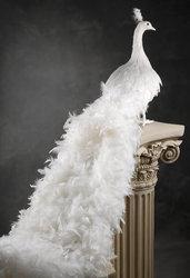 Продам 2 белых павлина для декора
